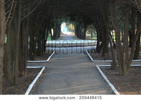 Tunnel from shaded path framed by thuja trunks and branches at the beautiful autumn park. Tranquil autumn mood. Horizontal orientation.