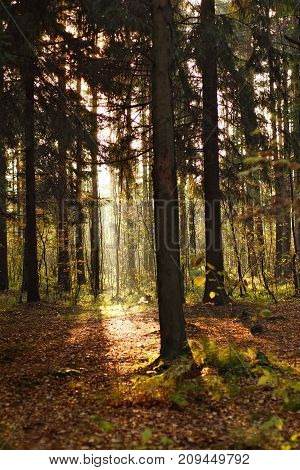 A Bright Band Of Sunlight In The Depths Of Deciduous Forest