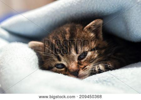 A cute little kitten lying in a blanket at home.