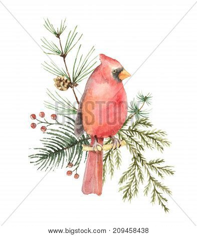 Watercolor Christmas bouquet with Bird Cardinal and fir branches. Illustration for greeting cards and invitations isolated on white background.