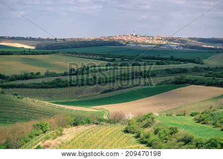 Vineyards and agricultural fields near a small town Vrbice in South Moravia