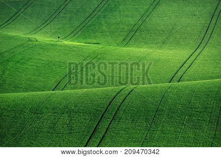 Green fields in the evening in South Moravia Czech Republic. Waves hills with green grass rolling fields. Beautiful spring landscape at sunset. Agriculture. Colorful nature background. Concept