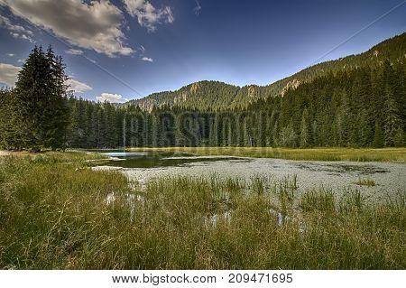 Grassy lake a part of Smolyan lakes Bulgaria .Rhodope mountains