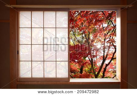 Sun shining through red autumn maple leaves outside a window in fall