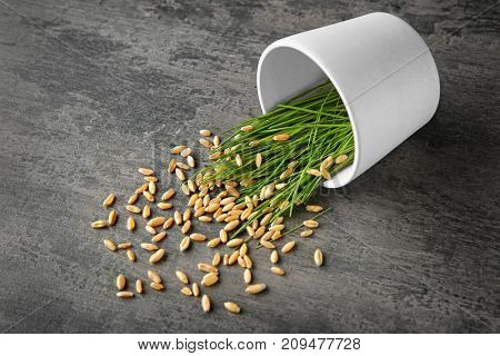 Pot with wheat grass sprouts and seeds scattered on table