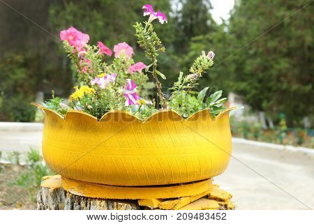 Old tire used as flowerbed outdoors