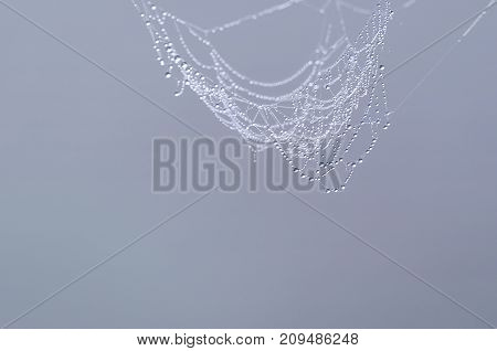 WEB - Autumn droplets of morning dew on cobwebs