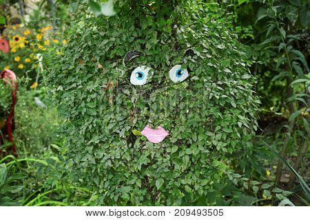 Funny bush with face in garden