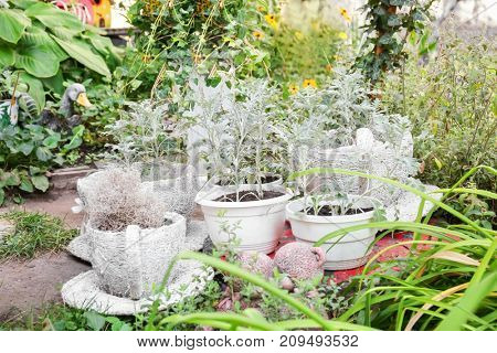 Wicker cups and pots used as garden decor outdoors