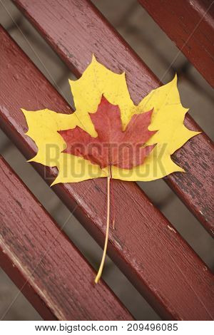 View from above, maple leaves on park bench