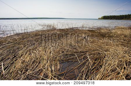 Reeds piled up on the shore of Dore Lake in Saskatchewan