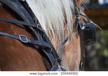 horse head and body right side blinder and bridle