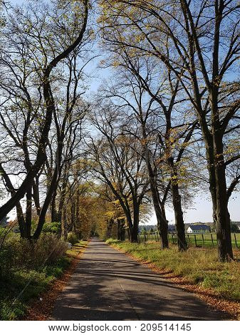 Country road in Northern Germany in autumn