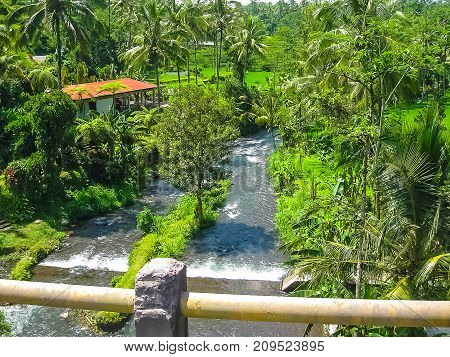 Mountain river Ayung among the jungle and bamboo thickets in Ubud, Bali island.