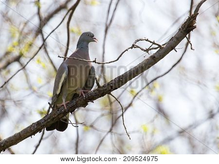 dove on the tree in nature . In the park in nature