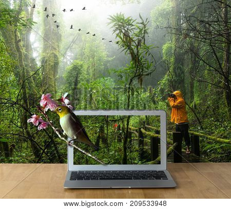 Laptop on the wooden table showing the Oriental White-eye bird on Traveller taking photo at Beautiful rain forest 3d concept