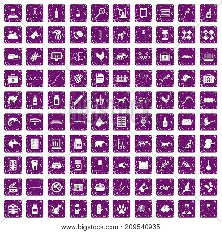 100 veterinary icons set in grunge style purple color isolated on white background vector illustration