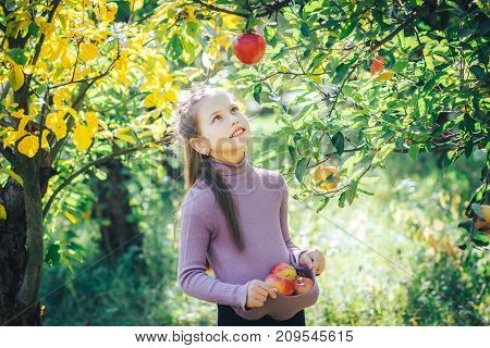 A cute girl gathered the whole hem of red apples in a garden
