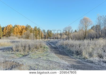 Autumn Autumn Frost Dry Plant first frost Frost Frost In The Field Frost On Plants Frost On The Grass Frost On The Leaves Frost On The Meadow Frost On The Trees Frozen Field Frozen Leaves Frozen Meadow Frozen Plant Late Autumn Meadow Nature Road In Frost