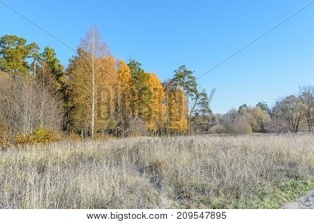 Autumn Autumn Frost first frost Forest Frost Frost On The Grass Frost On The Leaves Frost On The Trees Frozen Forest Grove Late Autumn Nature Trees
