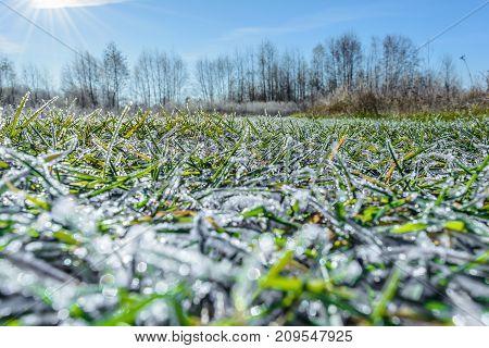 Autumn Autumn Frost first frost Frost Frost In The Field Frost On The Grass Frost On The Leaves Frost On The Meadow Frozen Field Frozen Meadow Late Autumn Meadow Nature
