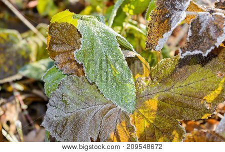 Autumn, Autumn Frost, first frost, Forest, Frost, Frost On The Leaves, Frozen Forest, Grove, Late Autumn, Nature