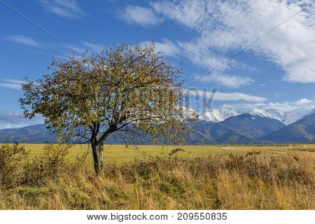 eautiful landscape with autumn tree and fallen leaves with Carpathian mountains in the background. Beautiful autumn landscape in romanian Carpathian mountains with high peaks covered with snow.