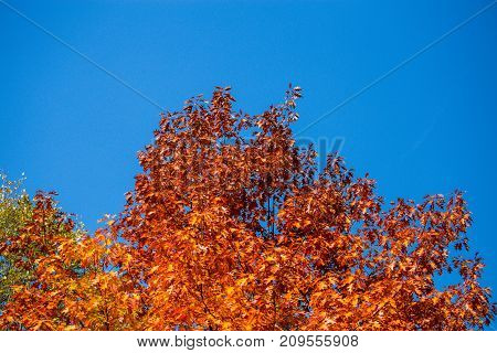Seasonal, Autumn, Wood Full Of Color Shades, Yellow Red Leaves, Sunny Day, Clear Skies In The Backgr