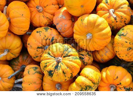 Different kinds of pumpkins ready for sale on a holiday.