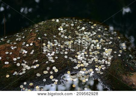 people make a wish by throw many coin into the pond at temple in thailand