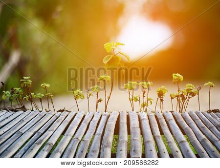The Bamboo Bench And Little Plants With Orange Light In Evening