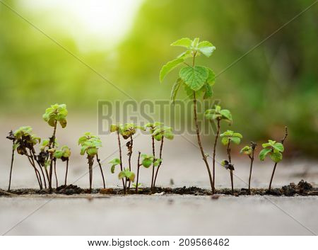 the green plant on the rift ofa cement ground with soft light poster