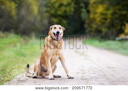 happy mixed breed dog posing outdoors in summer