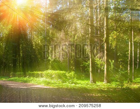 Spring forest landscape. Spring trees in the forest in sunny spring weather. Colorful spring forest nature with sunlight beams breaking through the spring forest trees. Forest spring landscape in sunny spring weather