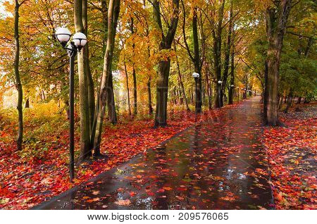 Autumn landscape. Yellowed autumn trees and fallen autumn leaves on the wet footpath in park autumn alley. Cloudy autumn landscape. Autumn park nature. Colorful autumn alley