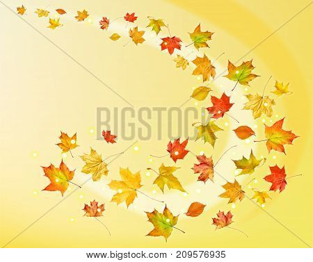 Falling leaves. Autumn leaves on yellow background.