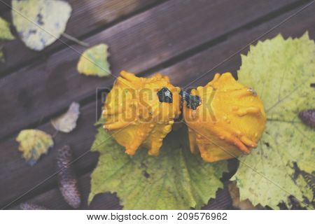 Decorative pumpkins on a wooden background. Autumn day. Top view