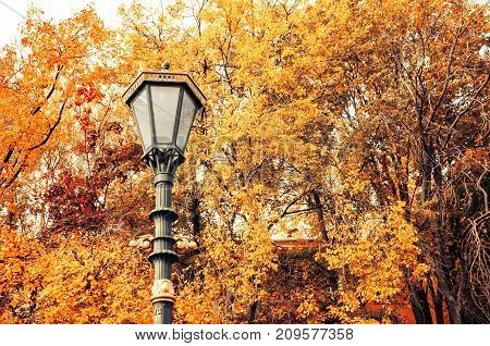 Fall trees background. Metal lantern on the background of the fall trees. Fall park scene in vintage tones. Fall background with yellowed fall trees in the fall park