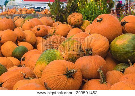 Colorful pumlpkins at a pumpkin patch farm
