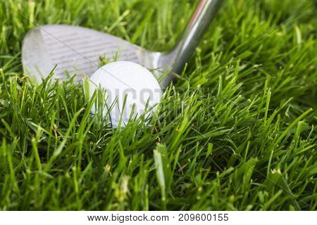 a golf club and golf ball on the course.