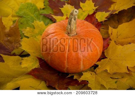 Pumpkin on the pile of fall colorful leaves