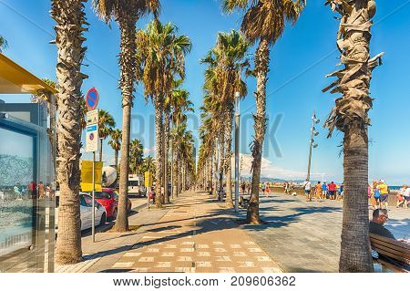 Bike Lane With Palm Trees, Barceloneta Beach, Barcelona, Catalonia, Spain