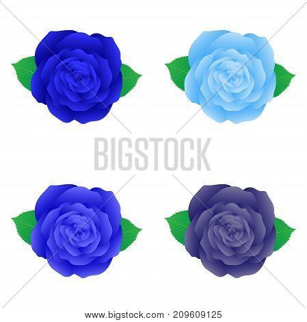Blue rose for decoration set of isolared blue rose floral design element
