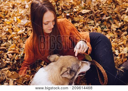 beautiful young red-haired girl walking in the park with her big dog sitting in a pile of autumn fallen leaves