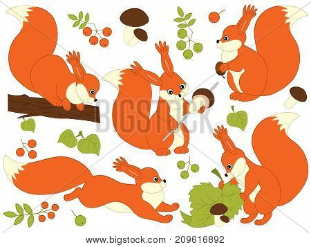 Vector set of cute cartoon forest squirrels. Vector woodland squirrels, mushrooms, leaves, nuts and berries. Vector squirrel.  Squirrels vector illustration