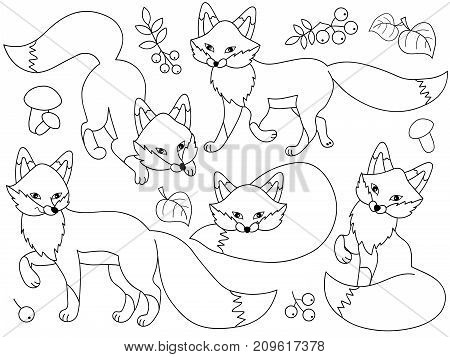 Vector set of black and white cute cartoon foxes, leaves, berries and mushrooms. Vector fox. Foxes vector illustration