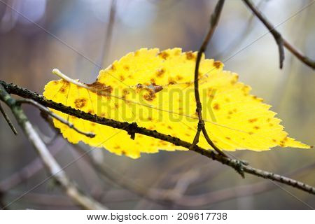 Alone yellow autumn leaf in forest