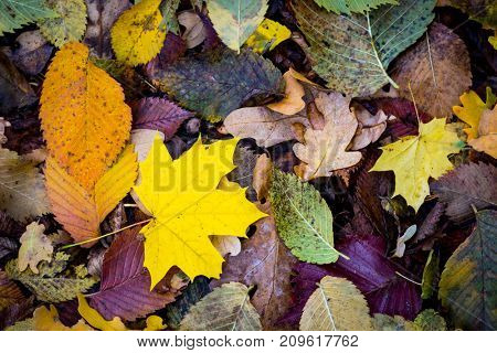 Abstract autumn background with leafage