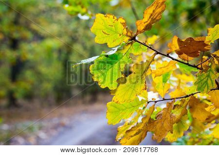 nice oak outumn twig with dry leafs
