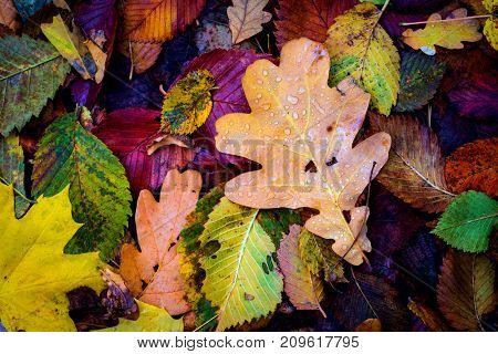 nice autumn cover with wet leafage
